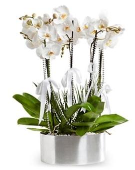 Beş dallı metal saksıda beyaz orkide  Gümüşhane internetten çiçek siparişi