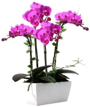 Seramik vazo içerisinde 4 dallı mor orkide  Gümüşhane cicek , cicekci