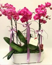 Beyaz seramik içerisinde 4 dallı orkide  Gümüşhane uluslararası çiçek gönderme
