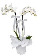 2 dallı beyaz orkide  Gümüşhane ucuz çiçek gönder