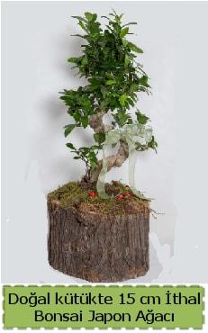 Doğal kütükte İthal bonsai japon ağacı  Gümüşhane çiçek siparişi vermek