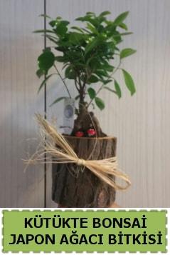 Kütük içerisinde doğal bonsai ağacı  Gümüşhane online çiçek gönderme sipariş