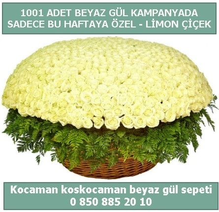 1001 adet beyaz gül sepeti özel kampanyada  Gümüşhane çiçekçiler