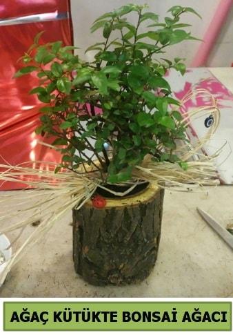 Doğal ağaç kütük içerisinde bonsai ağacı  Gümüşhane çiçekçiler