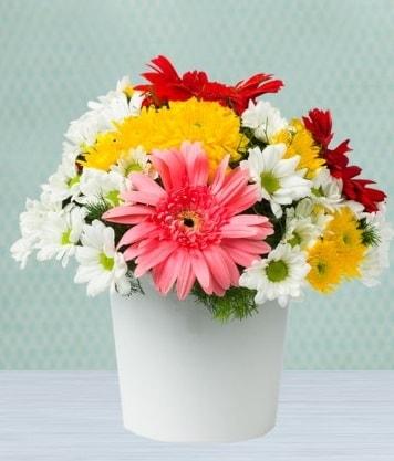 Seramik Vazoda Gelbera ve Papatya  Gümüşhane çiçek siparişi vermek
