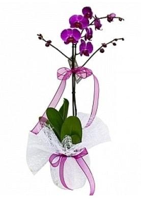 Tekli Mor Orkide  Gümüşhane internetten çiçek siparişi