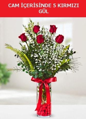 Cam içerisinde 5 adet kırmızı gül  Gümüşhane hediye sevgilime hediye çiçek