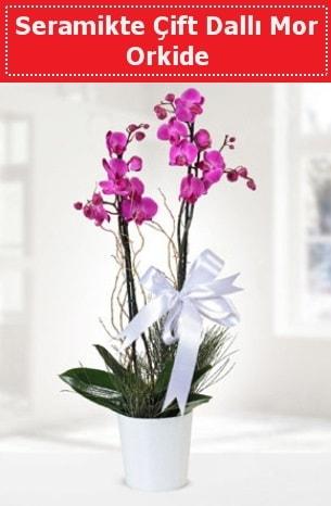 Seramikte Çift Dallı Mor Orkide  Gümüşhane çiçek gönderme sitemiz güvenlidir