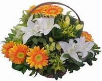 Gümüşhane çiçekçi mağazası  sepet modeli Gerbera kazablanka sepet